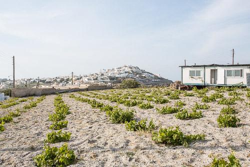 Hatzidakis – Organic Wine from Santorini