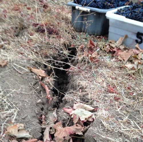Harvest Report 2014 – Robert Sinskey Vineyards