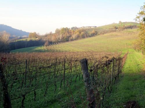 Ricci vineyard lo