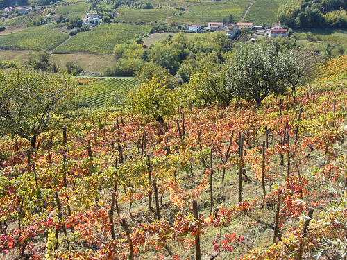 Cascina degli Ulivi vineyards-3-500px