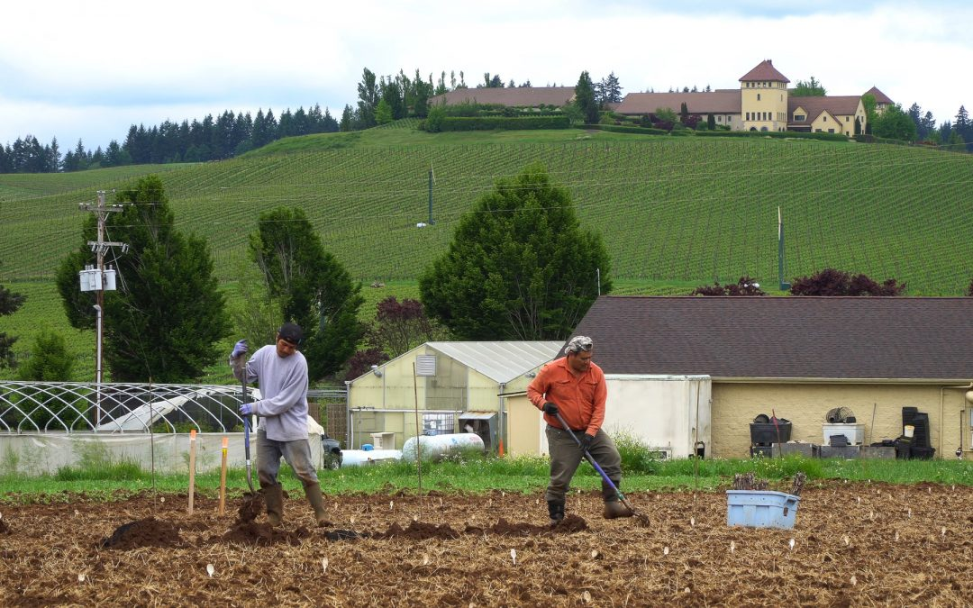Oregon's King Estate Becomes Largest Biodynamic Vineyard in U.S.