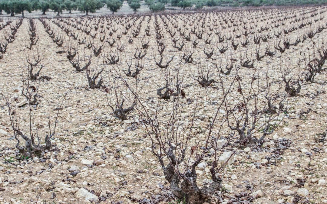 The Bonsai Vines of Pepe Mendoza